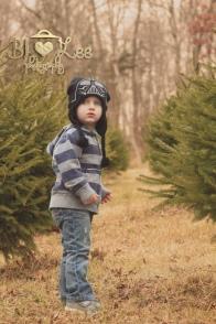 tree-shopping-2012-020-online